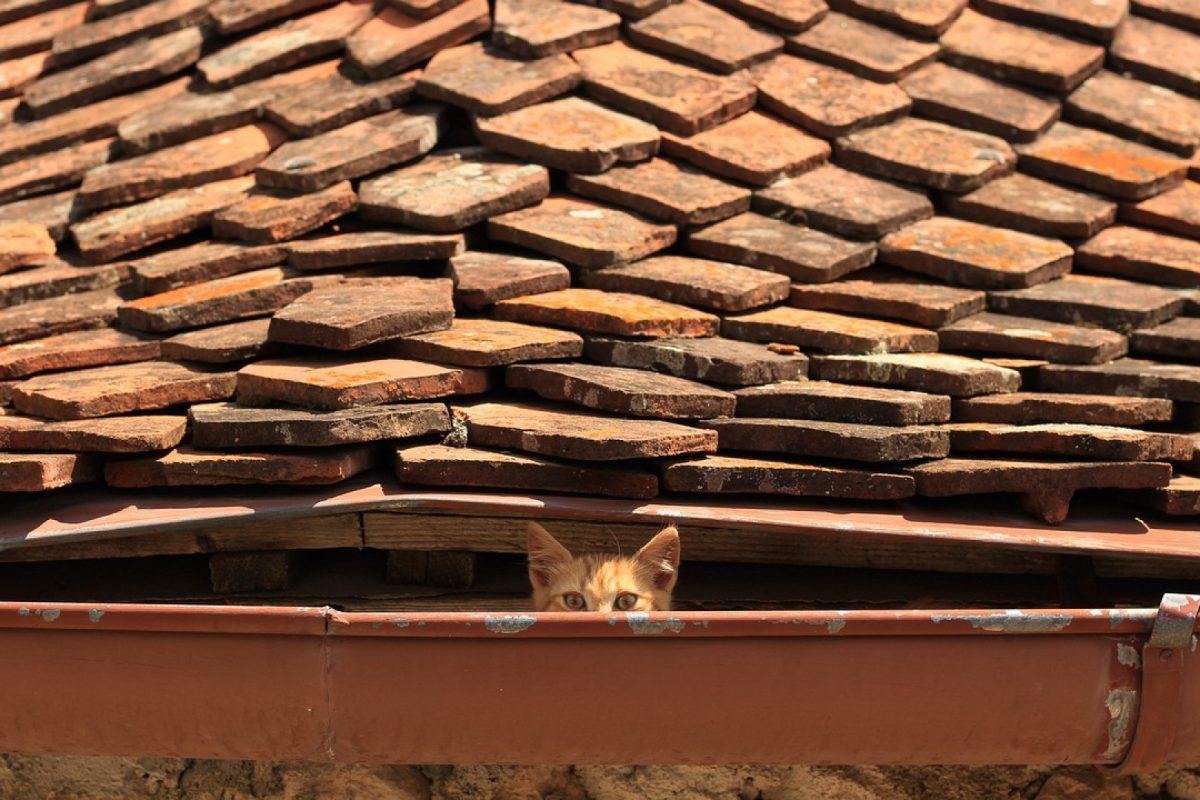 Faites appel à des experts pour rénover votre toiture et votre isolation